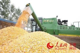玉米种子精选处理