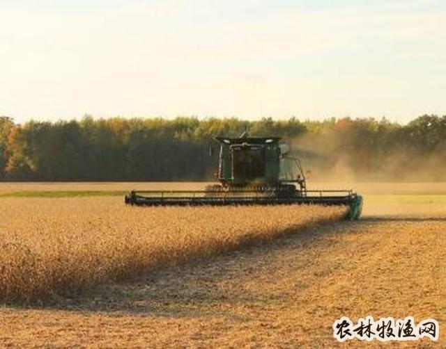 高蛋白大豆的栽培技术