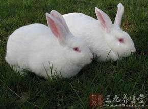 兔皮毛的功效与作用