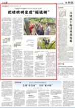 """贵州:把核桃树变成""""摇钱树"""""""