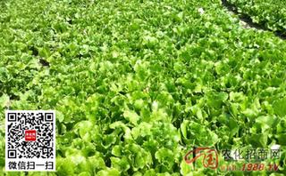 早春瓜类蔬菜栽培关键技术菜