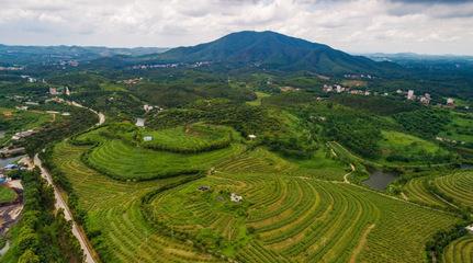 一镇一业 一村一品 嘉鱼打造百亿蔬菜产业集群