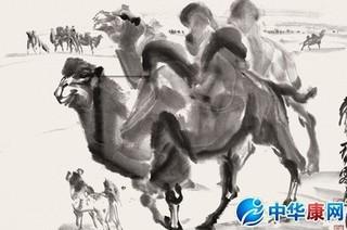 骆驼黄的功效与作用