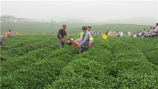 无锡市举办茶叶生产机械化示范推广现场活动