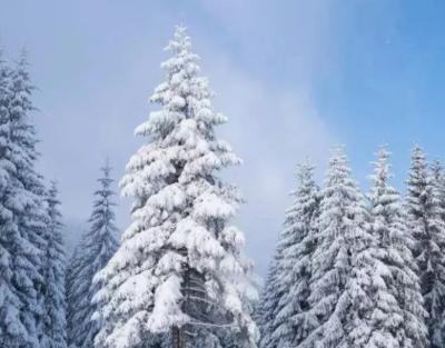 """雪后,受""""硬伤""""和""""软伤""""的苗木怎么管理?"""