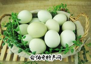 麻城绿壳蛋鸡