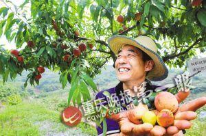 """重庆云阳科学管理果树 柑橘""""吃饱喝足""""结出好果子"""