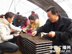 智能温室杨树营养钵扦插育苗技术要点