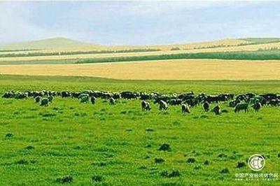 """青海将构建""""五大现代牧场""""促畜牧业高质量发展"""