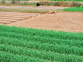 """桐乡市加大农业产业帮扶力度,打造精准扶贫""""精彩板块"""""""