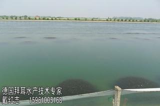 高温季节河蟹养殖的管理措施
