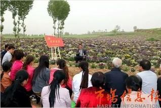 """陕西:黄花菜成为千阳农民脱贫的""""黄金花"""""""