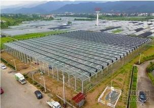 浙江东阳:建起玻璃温室大棚 发展休闲农业