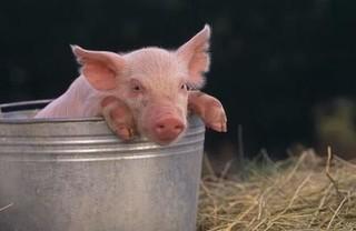 春节北京市投放千吨冻猪肉和800吨鸡蛋保供给