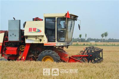 """合肥20.6万台套农机""""蓄势待发""""助力抢收小麦!"""