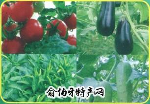 新兴露地无公害蔬菜