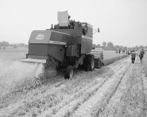 烟台农业迈向现代化