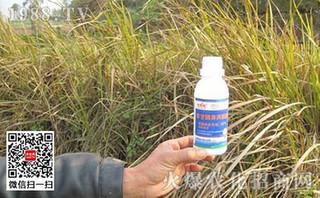 斯里兰卡决定解除对草甘膦的禁令