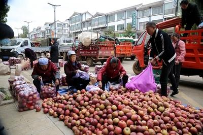 昭通:苹果大丰收 线上线下交易忙