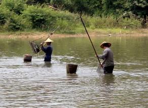 河蚬的移植及养殖技术