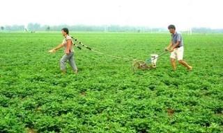 多施有机肥 花生产量高