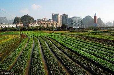 深化农村集体产权制度改革的榆阳实践