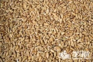 太子参和浮小麦的功效与作用