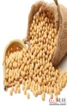 临储大豆拍卖在即 市场或将沉着应对