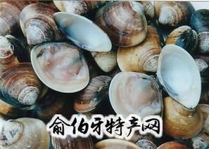 杂色蛤、文蛤