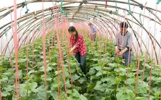 无公害叶菜类蔬菜的施肥技术