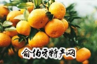台州黄岩脐橙