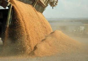 油菜籽入华受挫后 加拿大大豆豌豆出口商也慌了