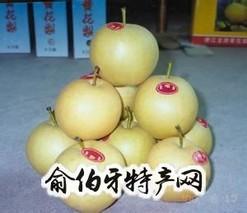 龙游黄花梨