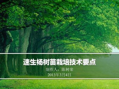 速生杨树苗栽培技术要点