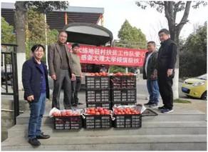 河南:驻村工作队巧解贫困户西红柿销售难题