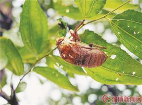 蝉蜕多少钱一斤