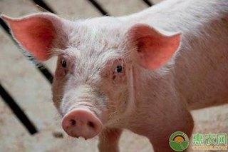 猪疥螨的防治方法