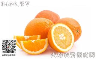 桂林龙胜县开展柑桔培训