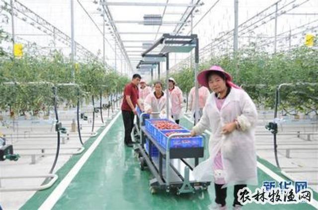 贵州扶贫大棚让易地搬迁群众好就业