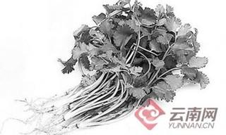 昆明蔬菜价格齐上涨 香菜28元一公斤