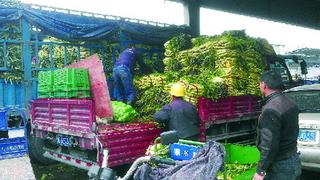 浙江金华:本地莴苣大量上市