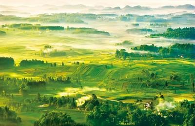 贵州遵义凤冈:立足生态优势 做好林下文章