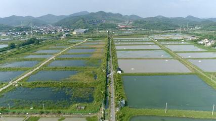 浙江湖州市水产种业发展势头良好