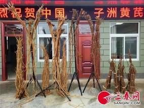 国家卫健委帮扶陕西子洲县打造黄芪全产业供应链