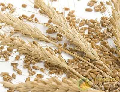 饲料中使用高粱大麦时应注意的加工工艺问题
