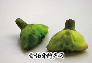 嘉兴南湖菱