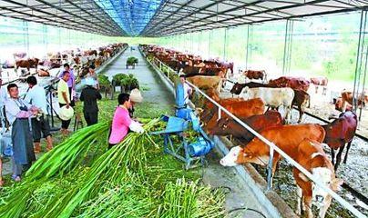 全疆农业产业化重点龙头企业达500家