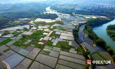 广西钦州:冬辣椒提前上市