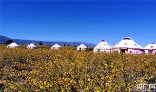 巴里坤举办草原湿地玫瑰花节