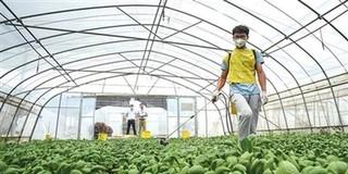 上海新型职业农民职业技能大赛(蔬菜行业赛区)举办